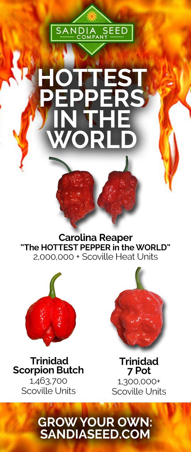 Hottest Peppers In The World – Grow Hot Peppers From Seed 400 x 300
