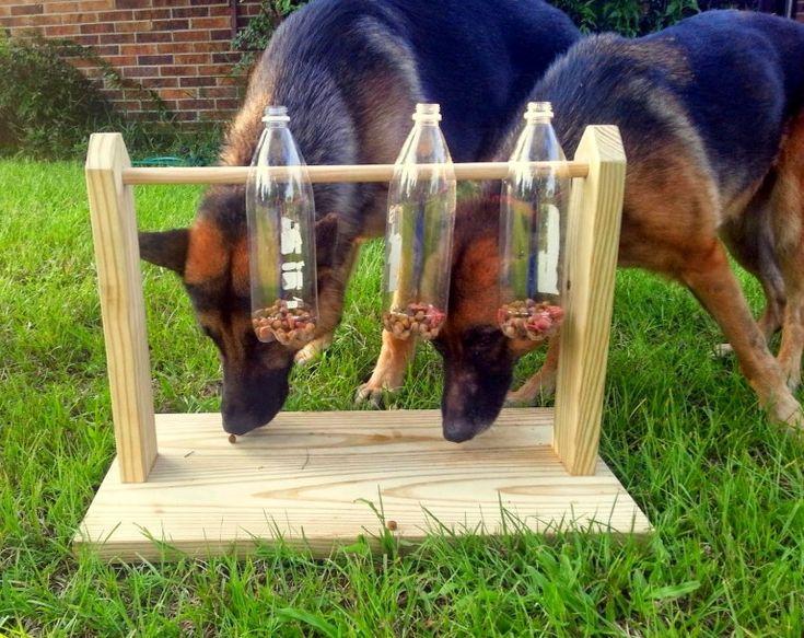 dos perros pastor alemán jugando con un sencillo juguete de madera con botellas de plástico