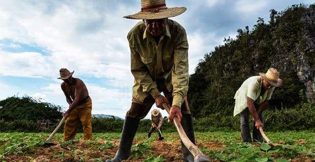 Γιατί τα «δώρα» του Ομπάμα φοβίζουν τους αγρότες της Κούβας