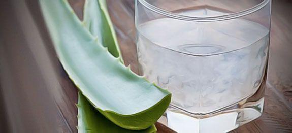 Aloe Vera : Méthode simple expliquée pas-à-pas pour récolter et congeler soi-même son gel d'aloe vera. Aloe vera découpe et conservation.