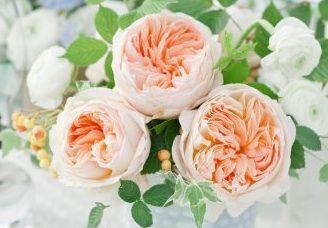 Juliet garden roses: all year   $$$