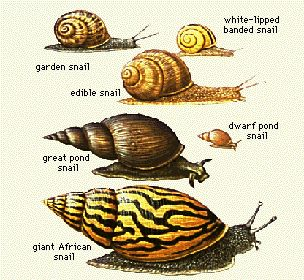 How To Care For Your Pet Garden Snails!(garden snails only)