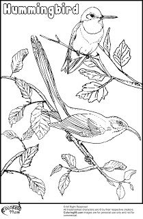 Bird migration coloring pages ~ 17 Best images about Hummingbird on Pinterest ...