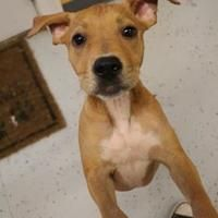 Pictures of Punky a Labrador Retriever/American Pit Bull Terrier Mix for adoption in New Orleans, LA who needs a loving home.