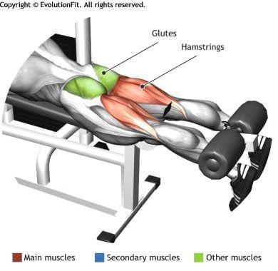 HAMSTRINGS -  LYING LEG CURL