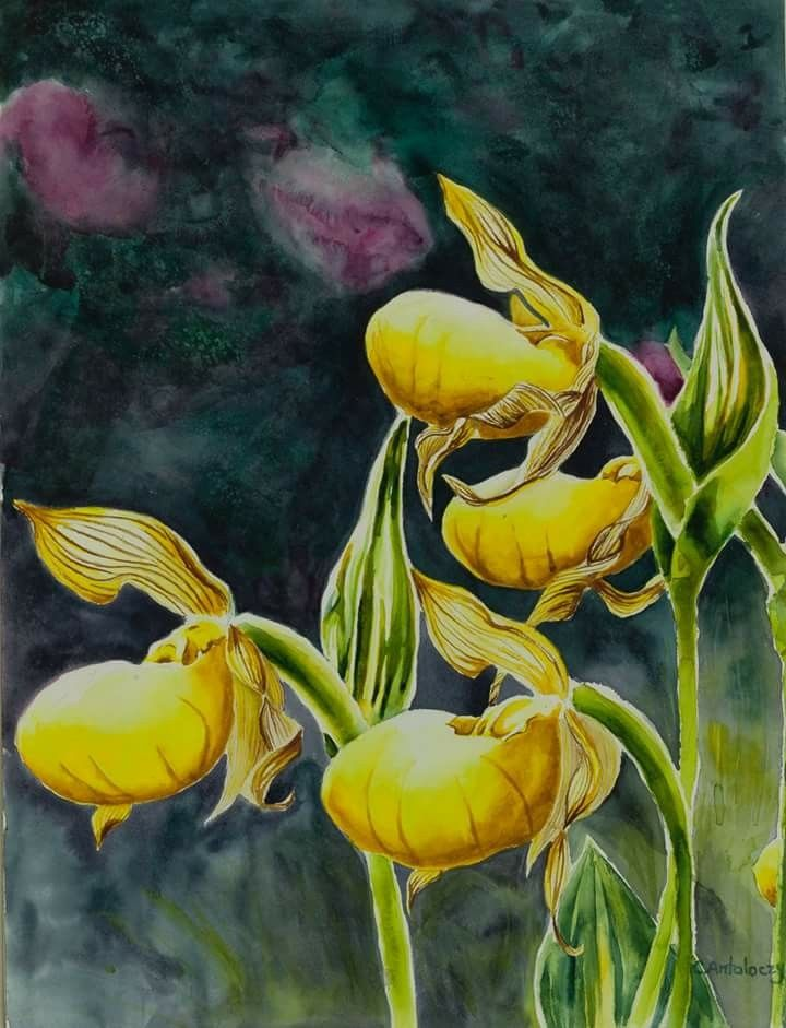 Yellow Orchids by Caitlyn Antaloczy