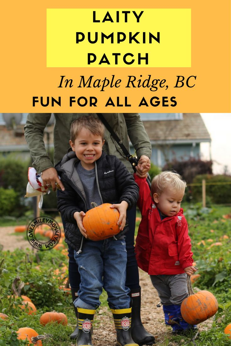 Laity Pumpkin Patch in Maple Ridge, BC Fun for all Ages!