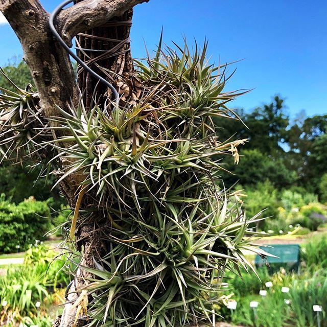 Hochgewachsen Botanischergarten Munster Pflanzen Gartentechnik Plants Herbs