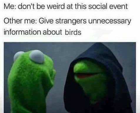 LET'S GO BIRDING