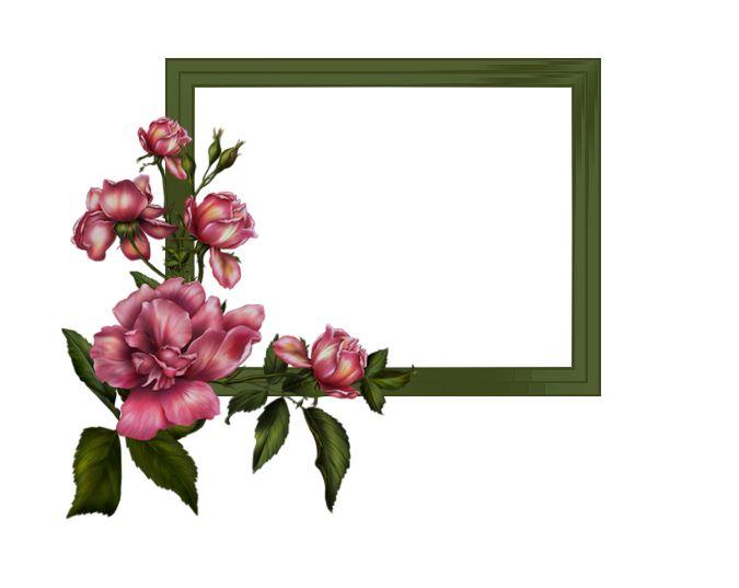 Rózsa, kerettel