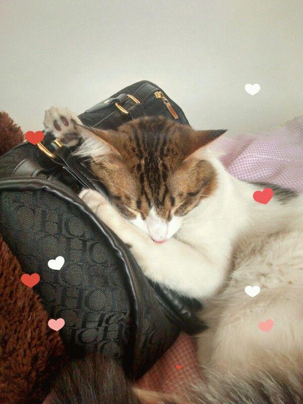 Mis gatos adorables