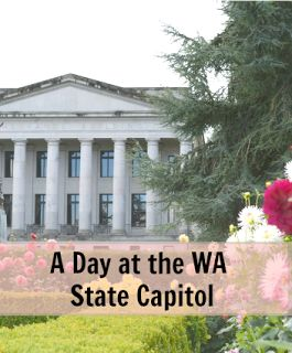MAPLE LEOPARD: A Day at the Washington State Capitol