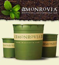 11 Best Monrovia Plants Images On Pinterest Backyard Ideas Garden Ideas And Monrovia Plants