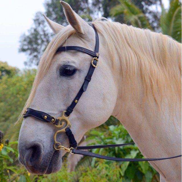Baroque Hackamore - Quinta Cavalos Verdes Saddlery