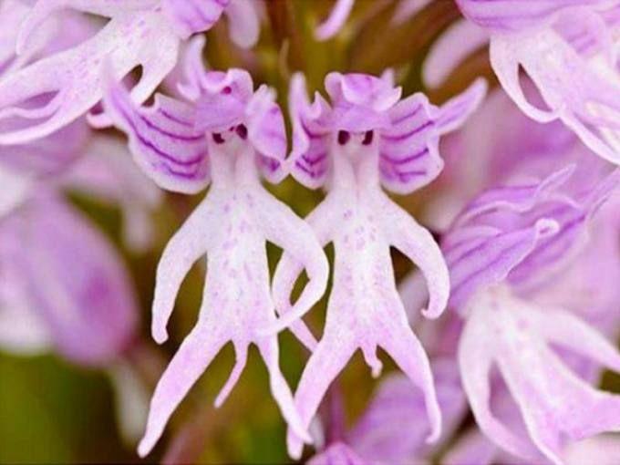 Plantes rares alsagarden