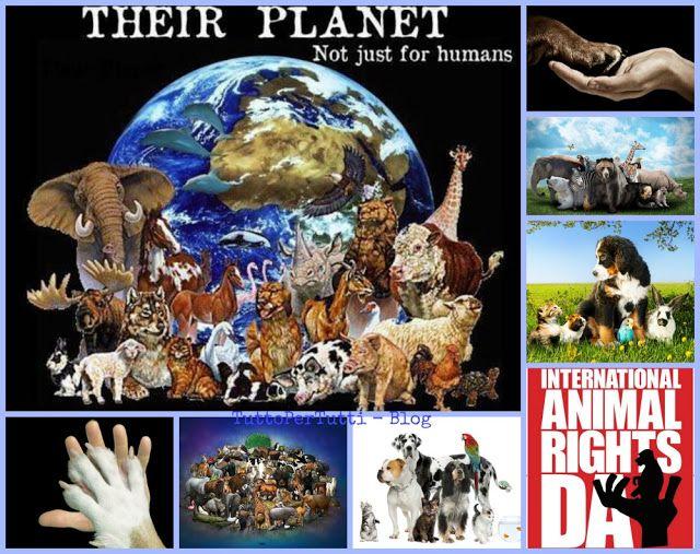 ANIMALE A CHI? - in occasione della Giornata Mondiale degli Animali http://tucc-per-tucc.blogspot.it/2016/10/animale-chi-in-occasione-della-giornata.html