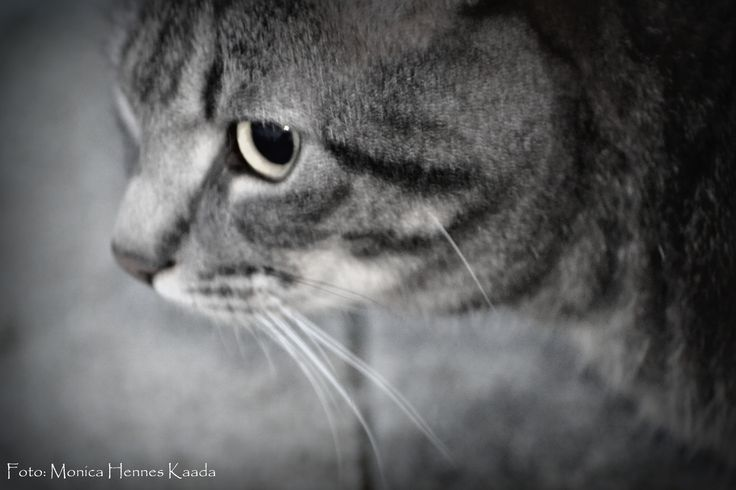 #cat #black&white