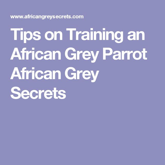 Tips on Training an African Grey Parrot African Grey Secrets