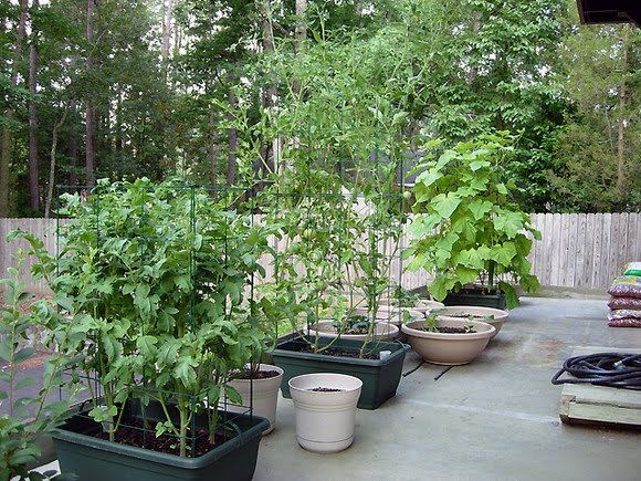Best Vegetable Container Gardening Images On Pinterest - Potted vegetable garden ideas