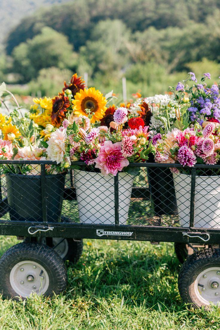 223 best Flowers images on Pinterest
