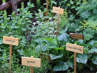 Logo Jak zhodnotit přebytky nejen zbylinkové zahrady?