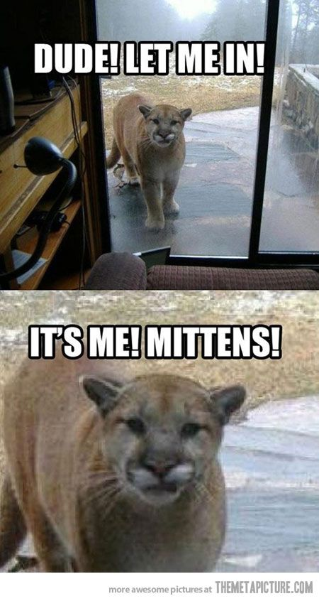It's just mittens!: Laughing, The Doors, Funny Cat, Mittens, Funny Stuff, Mountain Lion, So Funny, Cat Names, Animal