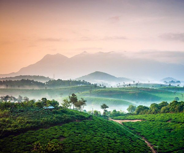 View from a tent in Grassroots by Grassroots Wayanad @ 10 Luxury Camping Ideas That You Must Try This Year! Source : http://www.tripigator.com/blog/luxury-camping-ideas-that-you-must-try-this-year/