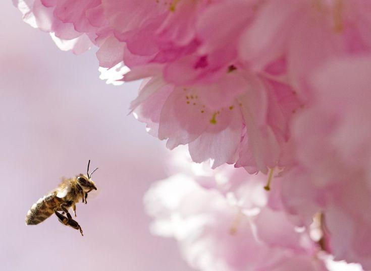Fotos: Equinoccio primaveral: Tres, dos, uno... ¡Primavera! | Actualidad | EL PAÍS
