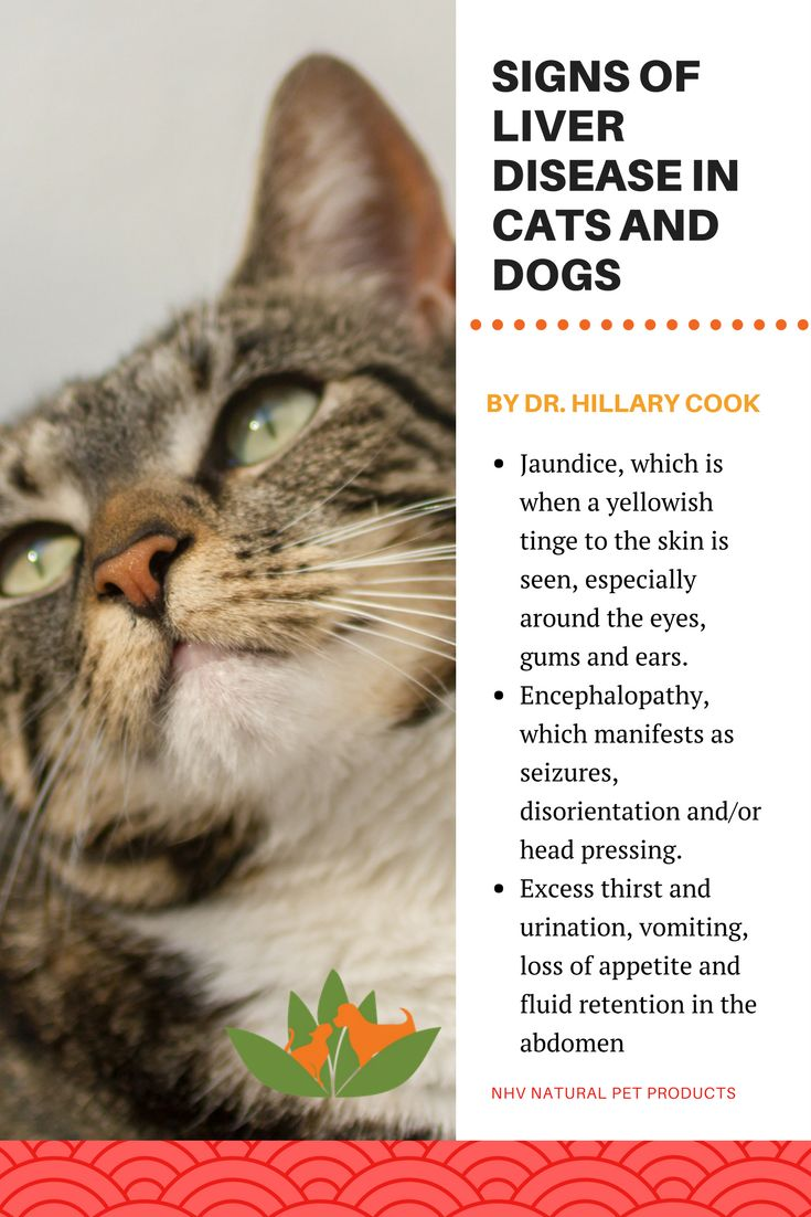 Best 25+ Cat diseases ideas on Pinterest | Pumpkin dog treats ...