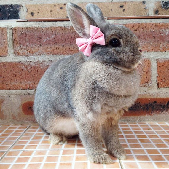 Baby pink bows for bunnies pet rabbit bows pet by HealthyNibbles