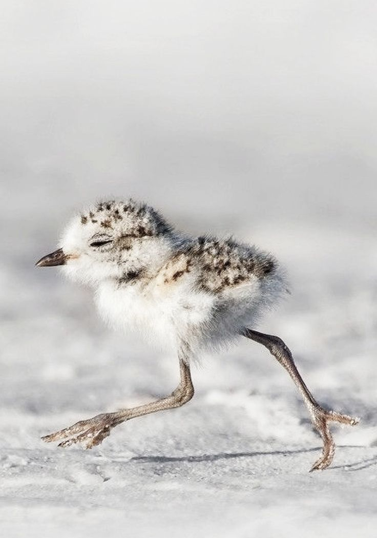 Kristian Bell of St Helier, Jersey, won round 227 with this image of a bird on the run in Sarasota, Florida baby birb