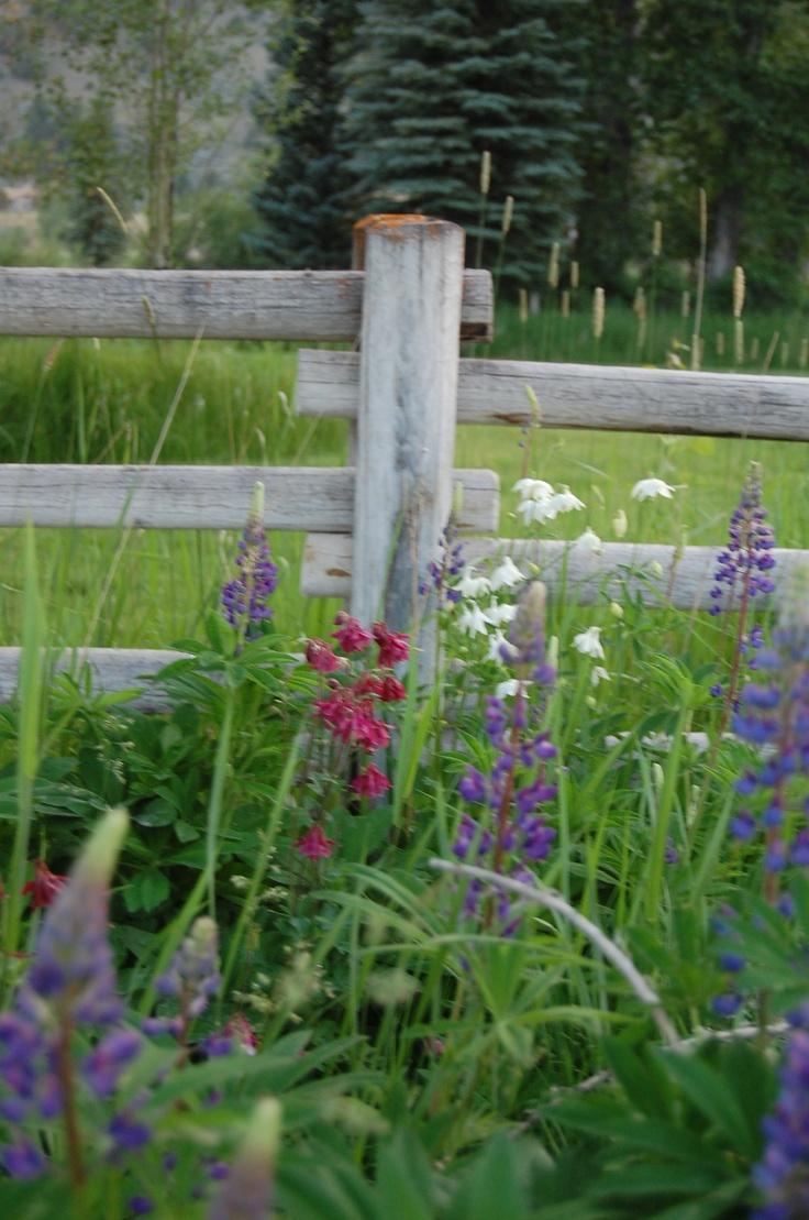 150 best gardening montana gardens images on pinterest   nature