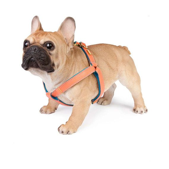Help your doggy dress to impress with our colourful and quirky orange leather dog harness. Team it with our exceptionally soft wool-felt lining in sky blue for a chipper feel or go for the white option to create a peaches and cream look. Choose your preferred colours from our extensive range