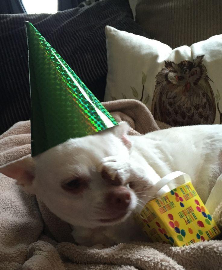 Now, it is my Birthday!!¡¡