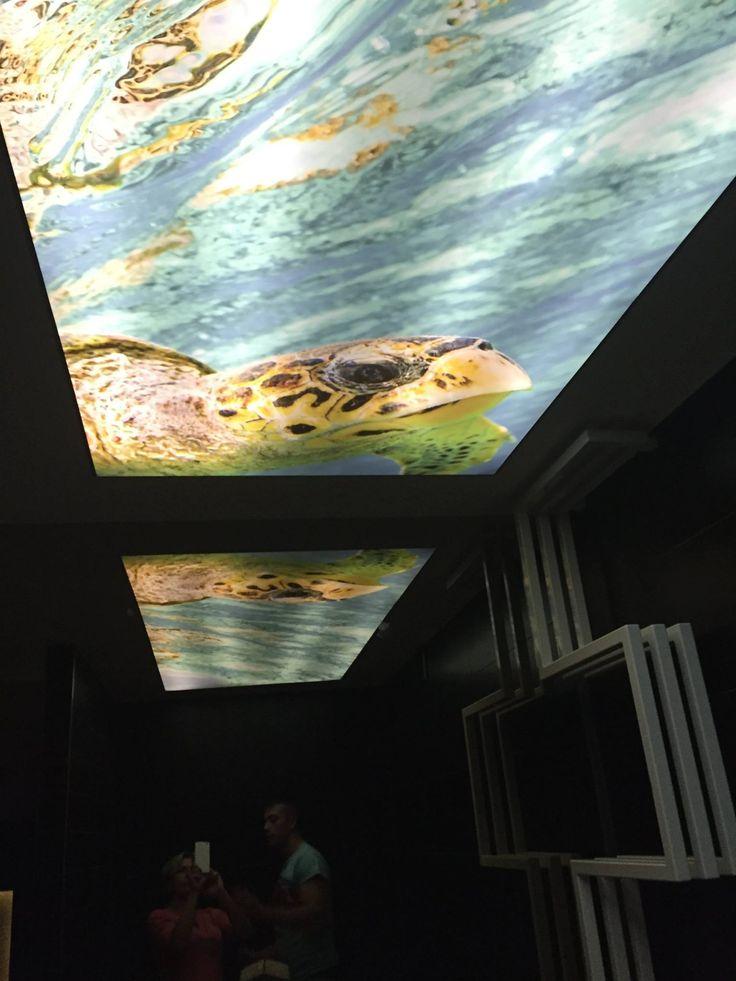 Podświetlany sufit napinany z nadrukiem. / Backlit stretch ceiling with overprint.