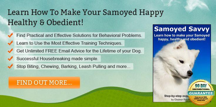 Samoyed Training Tips For Success