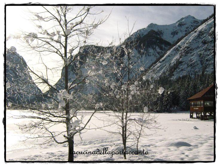 Alberi  sul lago di Dobbiaco (BZ)