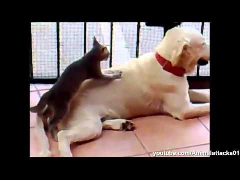 Best Funny Dogs Compilation 2014 Hd Part 1 - http://www.doggietalent.com/2014/11/best-funny-dogs-compilation-2014-hd-part-1/