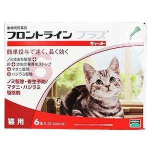 一緒に住む愛猫のノミ・ダニ ケアに「フロントライン プラス キャット」|キュートな猫の写真日記