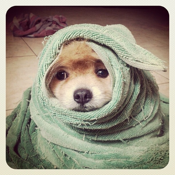 camouflage: Awesome Dogs, Awesome Animal, Puppys Kiss, Bath Towels, Baby Animal, Adorable, Conservation Dogs, Puppys Burritos, Beaches Towels