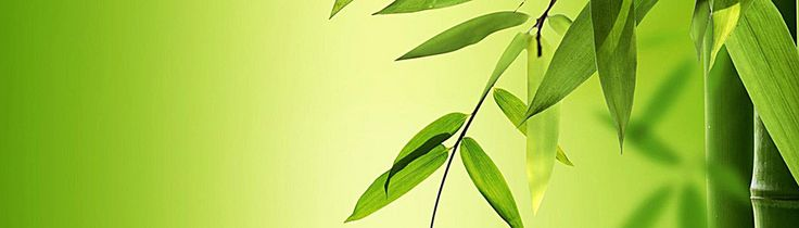 leaf,green,bamboo,Pen leaves,Environmental protection,Simple,Fresh