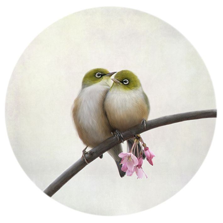 Togetherness - adorable photo of tiny Silver-Eye birds (also know as Wax-eyes or Tauhou) by Nathan Secker. www.imagevault.co.nz