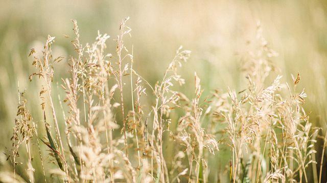 Служите Господу со страхом и радуйтесь с трепетом. Целуйте Сына, чтобы Он не разгневался, и вы не погибли в пути, потому что гнев Его быстро вспыхивает. Блаженны все, кто у Него ищет прибежища. - Псалом 2:11, 12| Приложение Библия | Bible.com
