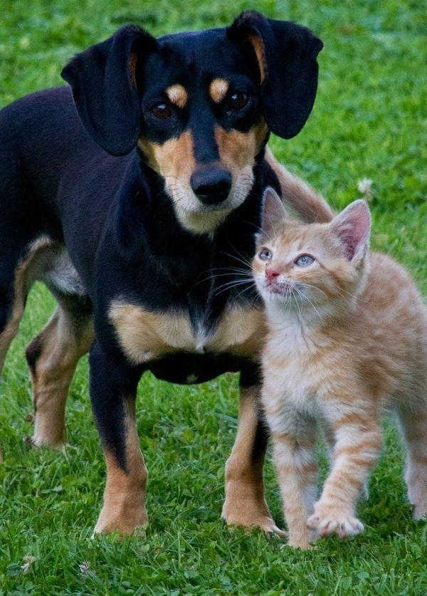 Trujące rośliny dla psa i kota