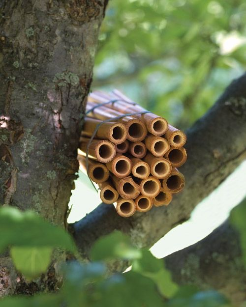 Simple Bamboo Bee House....mason bees are great pollinators that just need a home
