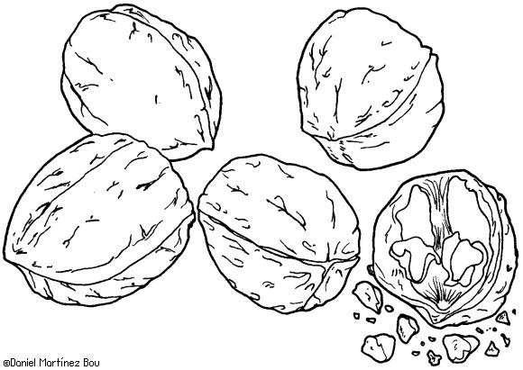 1499 mejores imgenes de dessins en Pinterest  Dibujos Verduras