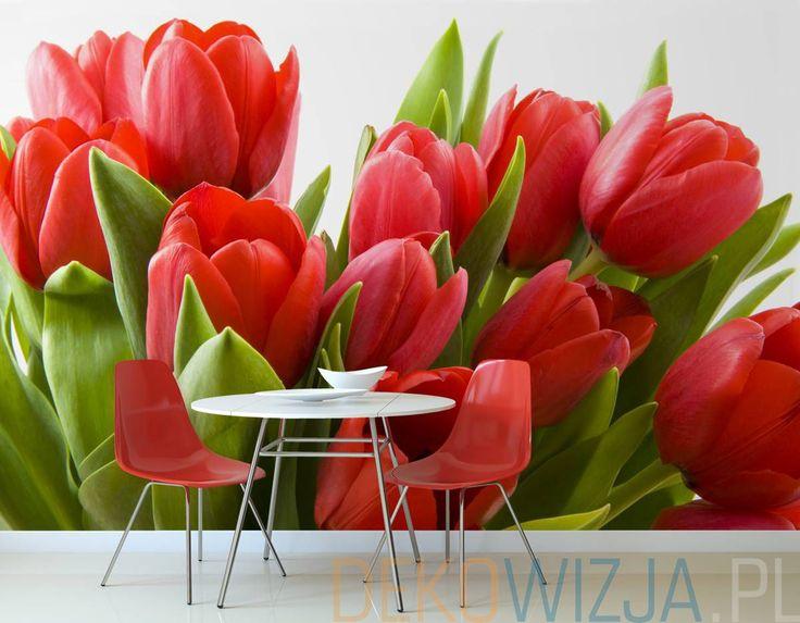 Fototapeta z Czerwonymi holenderskimi tulipanami