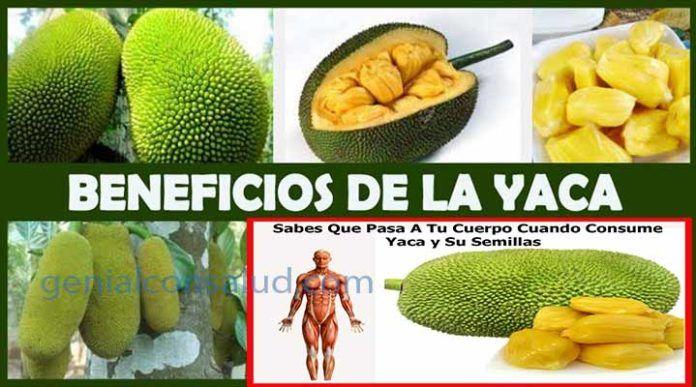 10 Beneficios de la jaca para la salud Seguramente; muchas personas anhelan apetitos-amente la fruta Jaca.  La fruta jaca contiene una única textura, de un sabor, Aromas, Color.  http://www.genialconsalud.com/10-beneficios-de-la-jaca-para-la-salud/