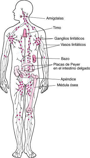 donde hay ganglios en el cuerpo humano