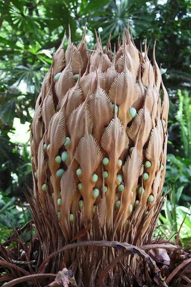 Cycads have been around for approx. 10 million years.